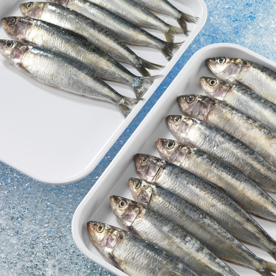 display trays with fish